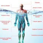 apa kangen si rolul ei in sanatatea organismului